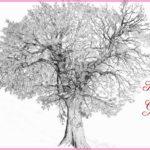Gambar Sketsa Pohon Nangka Terbaru