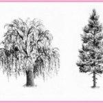 Gambar Sketsa Pohon Pinus Terbaru