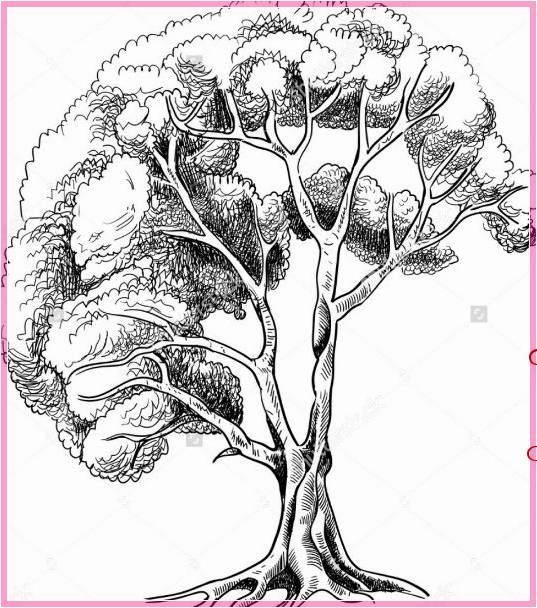 Gambar Sketsa Pohon Rindang Terbaru