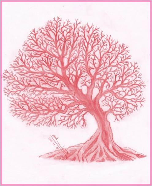 Gambar Sketsa Pohon Sakura Terbaru
