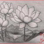 Menggambar Sketsa Bunga Teratai Terbaik