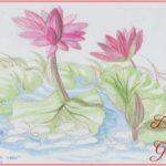 Sketsa Bunga Teratai Berwarna Terbaik