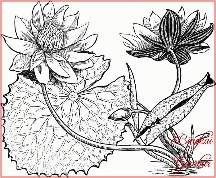 Sketsa Bunga Teratai Besar Terbaik