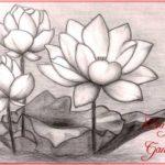 Sketsa Bunga Teratai Cantik Terbaik