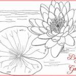 Sketsa Bunga Teratai Putih Terbaik