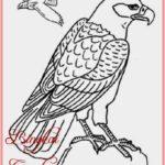 Sketsa Burung Elang Jawa