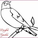 Sketsa Gambar Binatang Burung Terbaru