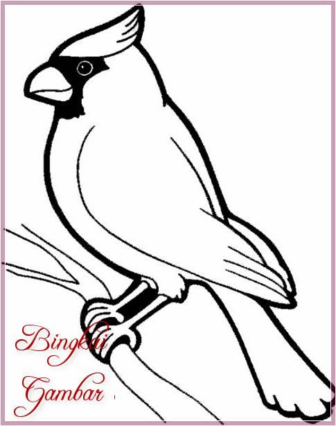 Sketsa Gambar Fauna Burung Terbaru