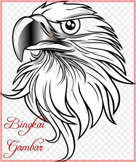 Sketsa Kepala Burung Elang