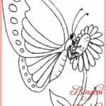 Sketsa Kupu Kupu Mengisap Bunga