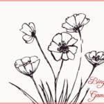 Contoh Gambar Sketsa Bunga Sederhana
