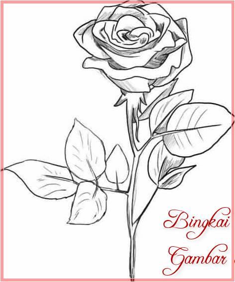 Contoh Sketsa Bunga Mawar Sederhana