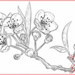 Contoh Sketsa Bunga Sakura Sederhana