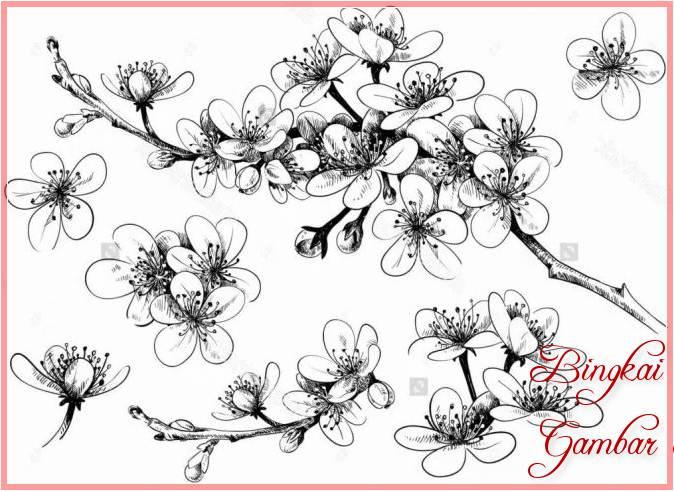 Sketsa Bunga Sakura Yang Sederhana