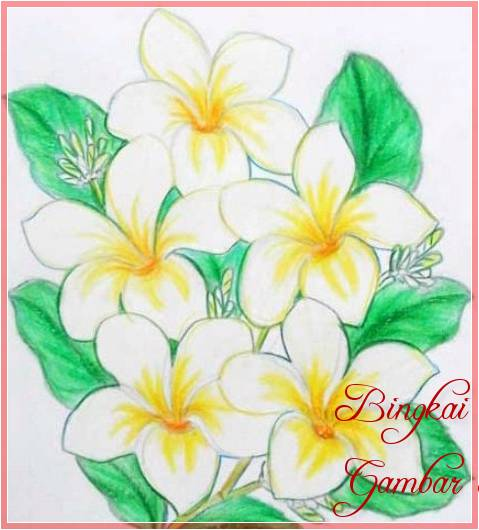 Sketsa Bunga Sederhana Berwarna