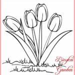 Sketsa Bunga Tulip Sederhana