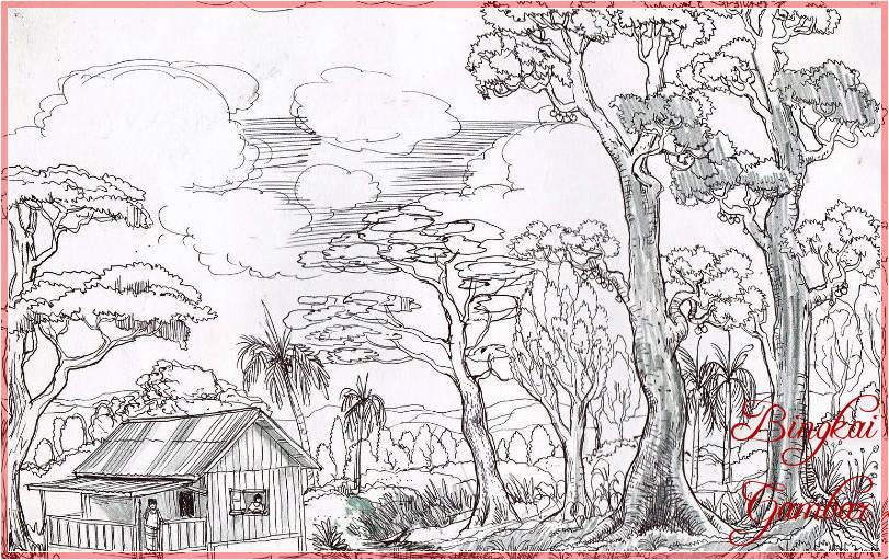 Sketsa Gambar Hutan Pohon Cemara