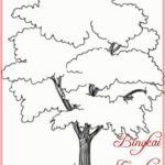 Sketsa Gambar Jenis Pohon Cemara