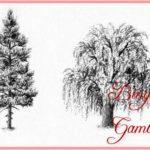 Sketsa Gambar Macam Macam Pohon Cemara