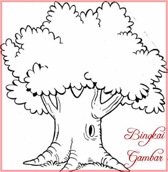 Sketsa Gambar Pohon Cemara Besar