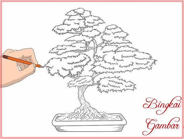 Sketsa Gambar Pohon Cemara Bonsai