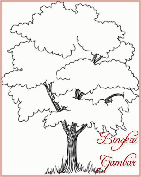 Sketsa Gambar Pohon Cemara Mudah