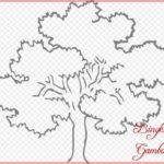 Sketsa Gambar Pohon Cemara Pinus