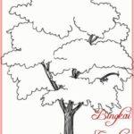 Sketsa Gambar Pohon Cemara Udang
