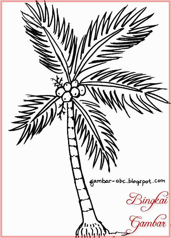 Sketsa Gambar Pohon Kelapa Berbuah