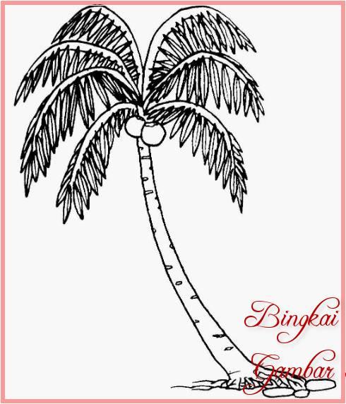 Sketsa Gambar Pohon Kelapa Bonsai