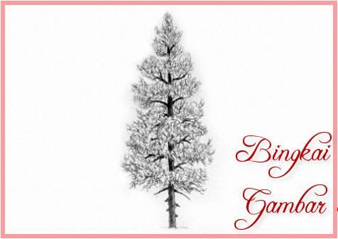 Sketsa Gambar Pohon Pinus Animasi