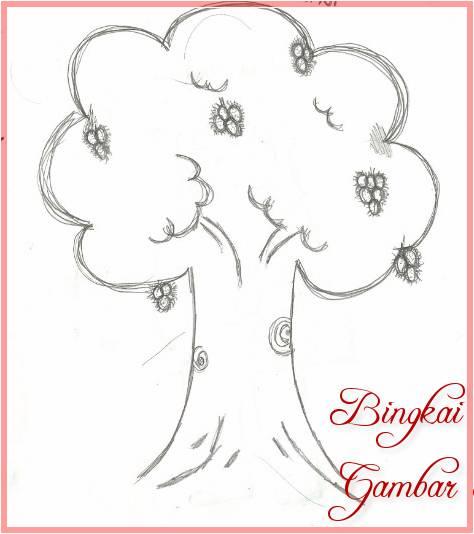 Sketsa Gambar Pohon Pinus Dan Buahnya