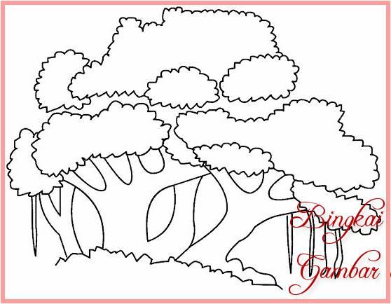 Sketsa Gambar Pohon Pinus Hitam Putih