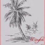 Sketsa Gambar Tanaman Kelapa Hibrida