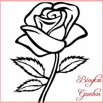 Sketsa Sederhana Bunga Mawar