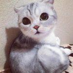 Gambar Anak Kucing Persia Lucu