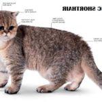 Gambar Dan Nama Kucing Persia