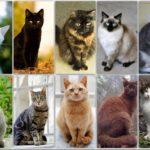 Gambar Semua Jenis Kucing Persia
