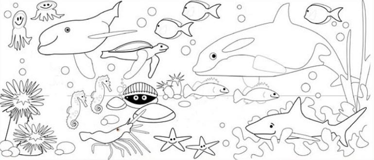 Gambar Sketsa Hewan Dalam Laut