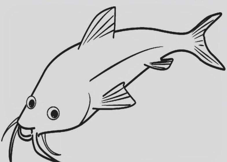 Gambar Sketsa Ikan Air Tawar