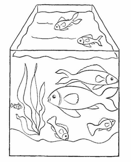Gambar Sketsa Ikan Dalam Akuarium