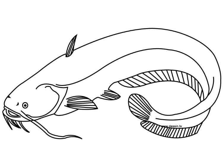 Gambar Sketsa Ikan Lele