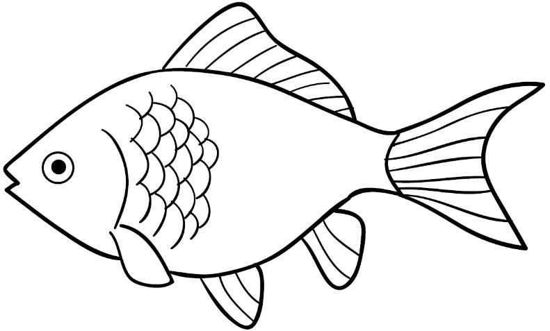 Gambar Sketsa Ikan Mas